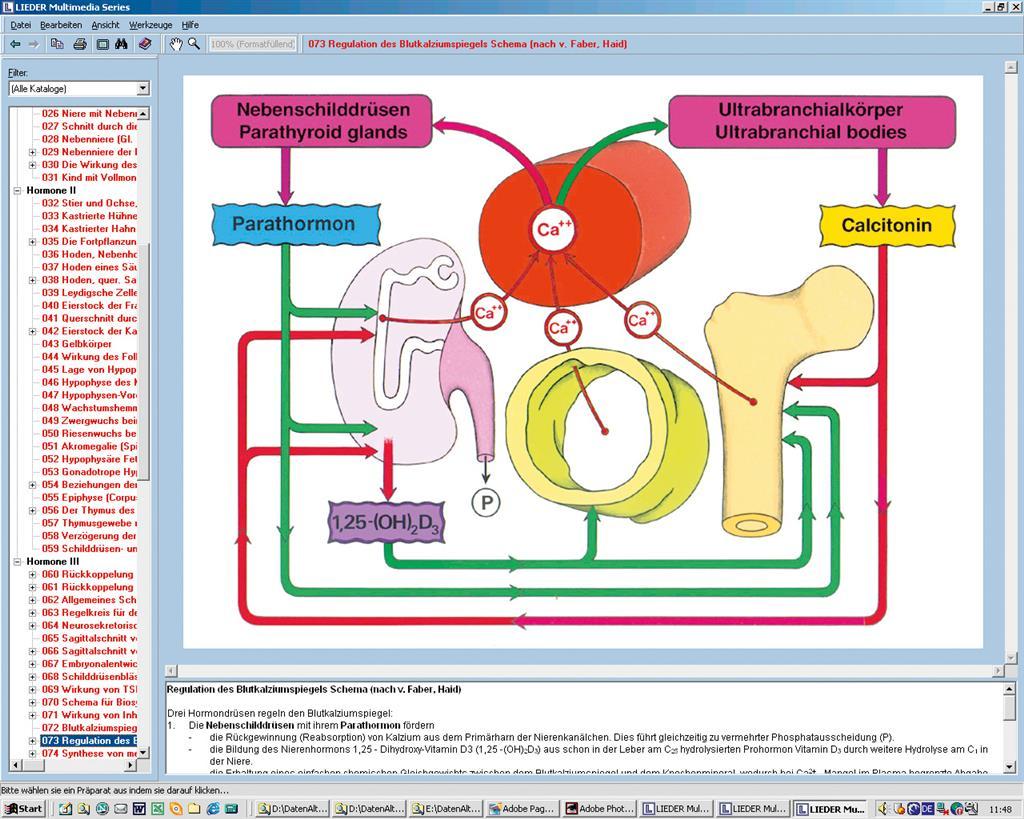 Hormone Hormonsystem Endokrinologie Bernhard Kleine Download Images ...