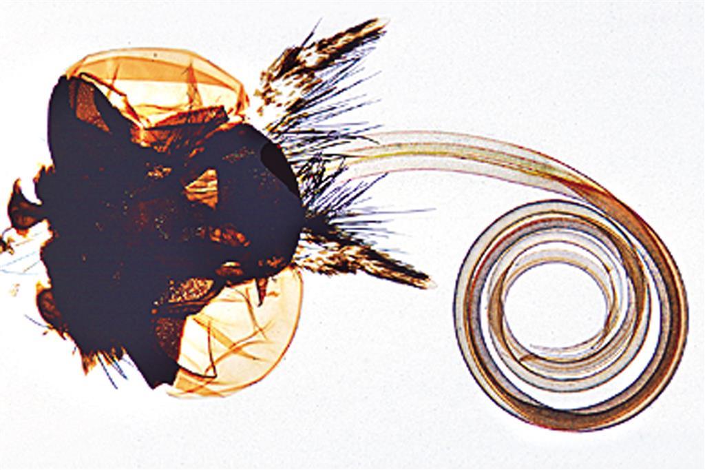Mundwerkzeuge der Insekten 20 Mikropräparate | www.der-hedinger.de