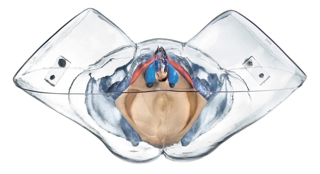 Modell der weiblichen Sexualorgane | www.der-hedinger.de