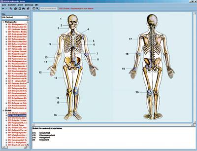 Skelett, Muskulatur und Bewegungsapparat des Menschen, CD-ROM | www ...